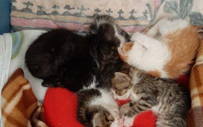 Nuevas camadas de gatitos
